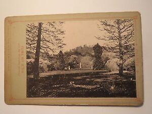 Pillnitz-Flora-mit-Ruise-von-der-Mittelallee-gesehen-Lichtdruck-KAB