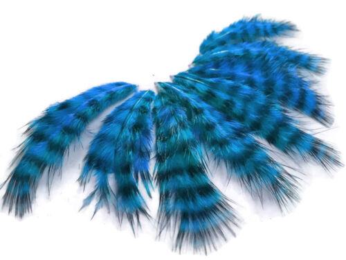 1 Dozen Turquoise Blue Grizzly Rooster Chickabou Fluff Feathers USA SELLER