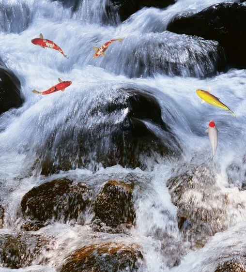 3D Fast Waterfall Fish Floor WallPaper Murals Wall Print Decal 5D AJ WALLPAPER