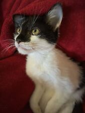 Sponsor Jimmy Pop, a Rescue Kitten with CH for a Month - Get His Story & Photos