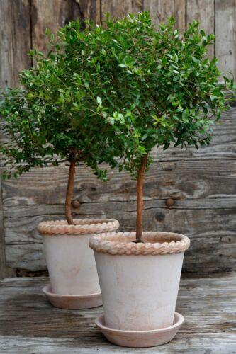 Bergs Potter Emilia 21cm Antique Rose