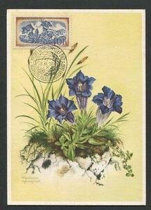 Diplomatique Cssr Mk 1957 Flora Enzian Maximum Carte Carte Maximum Card Mc Cm D7916-afficher Le Titre D'origine