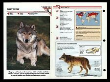 """GRAY WOLF"" WILD LIFE FACT FILE ANIMAL CARD/HOME SCHOOL STUDY"