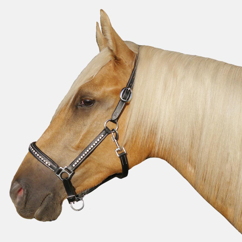 Cob Full Large Horse Dark Padded LEATHER Barn Brass  Hardware Show Bling Halter  fantastic quality