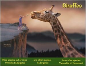 """The African Giraffe, an Endangered Species card by """"PostcardsTo SaveThePlanet"""""""