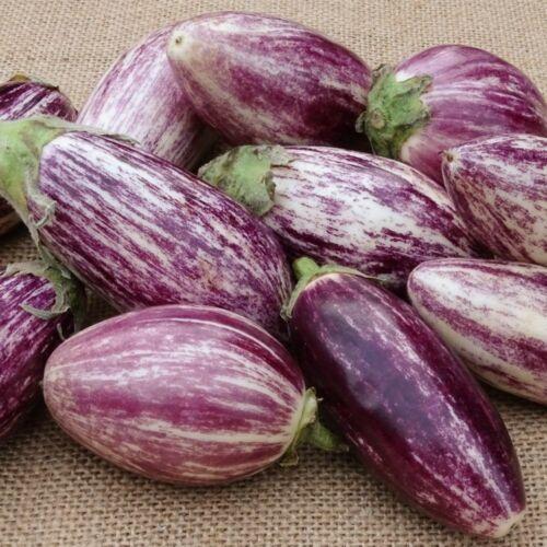 20 Graines D/'Aubergine Listada Méthode Bio
