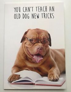 Image Is Loading Dogue De Bordeaux Old Dog New Tricks Large