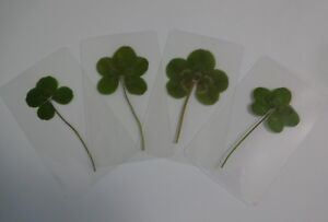 4-Four-Leaf-Clover-Laminated-Bookmark-Stocking-Stuffer-Gift-Favors-Lucky-Charm