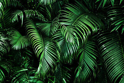 Tropical Green Palm Leaves Pattern 7x5ft Vinyl Studio Backdrop Photo Background Ebay We hope you enjoy our growing collection of hd images to use as a background or home screen for your smartphone or computer. tropical green palm leaves pattern 7x5ft vinyl studio backdrop photo background ebay