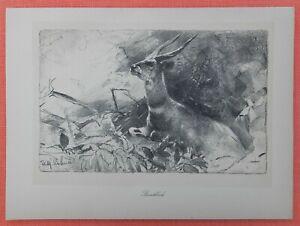 Livraison Rapide Buschbock Antilope Wilhelm Kuhnert Afrique Lithographie 1920-afficher Le Titre D'origine
