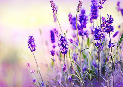 Lavender Printed Glass Splashback ~ Choose your size!!!