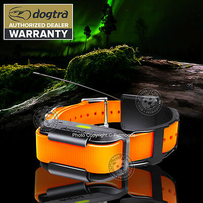 Dogtra Pathfinder Additional GPS Dog Collar Orange Tracking Training & Hunting