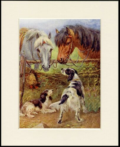 ENGLISH SPRINGER SPANIEL DOGS AND HORSES LOVELY DOG PRINT MOUNTED READY TO FRAME