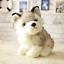Realistic-Husky-Dog-Plush-Toy-Stuffed-Animal-Soft-Wolf-Pet-Doll-Cute-Kid-Gift-7 thumbnail 7