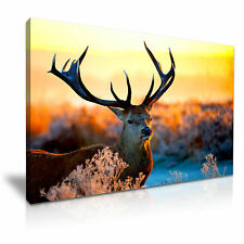 DEER Stag animali CANVAS WALL ART PICTURE PRINT 76x50cm