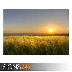 A-SUNNY-DAYS-END-AD989-NATURE-POSTER-Photo-Picture-Poster-Print-Art-A0-to-A4