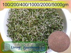 Broccoli-Sprout-seeds-Organic-Certified-Sprouts-Sprouting-seeds-0-1-5kg