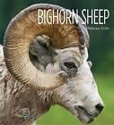 Bighorn Sheep by Melissa Gish (Hardback, 2015)