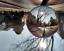 Indexbild 25 - 50/80/100mm K9 Clear Crystal Ball Photography Glass Lens Sphere Ball