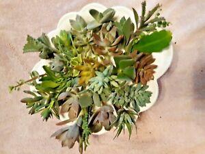 15-Assorted-Succulent-Cuttings-15-Varieties-3-034-4-034