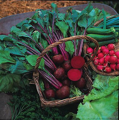 Vegetable - Beetroot - Boltardy - 200 Seeds - Economy
