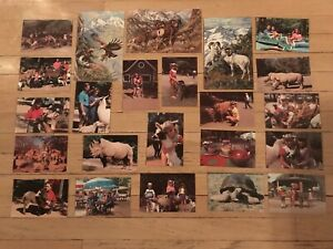 Catskill-Game-Farm-Postcards-23-Different-Unused-Cards