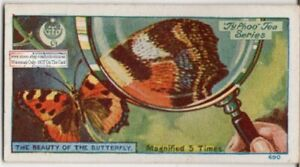 Structure-Of-Butterfly-039-s-Wing-Magnified-5-X-1920s-Trade-Ad-Card