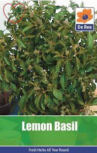 Herb-Lemon-Basil-Seeds