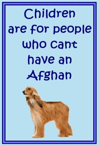 Afghan New Free UK p//p Dog fridge magnets New Gift