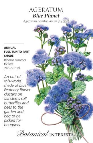 30 Seeds Blue Planet Ageratum Seeds