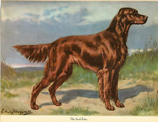 IRISH SETTER LOVELY OLD 1950's DOG ART PRINT by EDWIN MEGARGEE