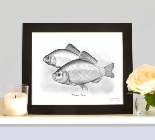 CRUCIAN CARP Mounted Limited Edition Art Print Picture