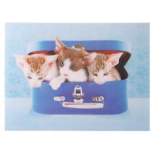 Süße Kätzchen in Koffer 3D Bild   Abmessungen: 29.5 x 39.5cm