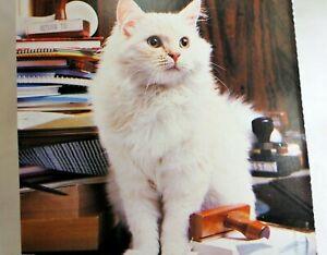 Details about Postcard Animal Shelter North Shore League Adopt a Pet Kitten  Cat vintage 1980's