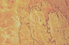 Pimento Pepperwood Burl Wood Veneer 19 X 36 Raw With No Backing 142 Thick