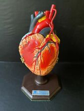 New Listing1978 Heart Model Medical Plastics Lab Texas 4 Hinged Flaps With Stand