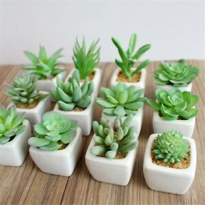 Image Is Loading Pro Artificial Succulents Plant Garden Mini Fake Cactus