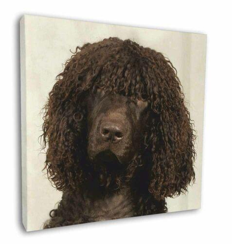 "AD-IWS-C12 Picture Print Irish Water Spaniel Dog 12/""x12/"" Wall Art Canvas Decor"