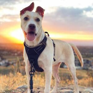 Rabbitgoo-Front-Range-Dog-Harness-No-Pull-Pet-Harness-Adjustable-Medium-Size