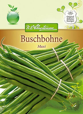 Buschbohne 'Maxi' frühe Sorte - Phaseolus vulgaris Samen Bohne 4360