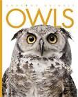 Owls by Valerie Bodden (Paperback / softback, 2013)