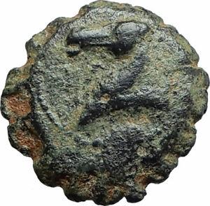 DEMETRIOS-I-Soter-RARE-R3-Ancient-Seleukid-Greek-Coin-HORSE-ELEPHANT-i75663