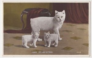 Cats-Manx-Cat-and-Kittens-Postcard-B582