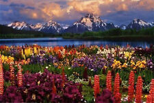 GRAND TETON - SCENIC POSTER - 24x36 SHRINK WRAPPED - NATURE MOUNTAINS 3765