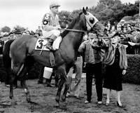 1943 Count Fleet Triple Crown Horse Racing 8x10 Photo