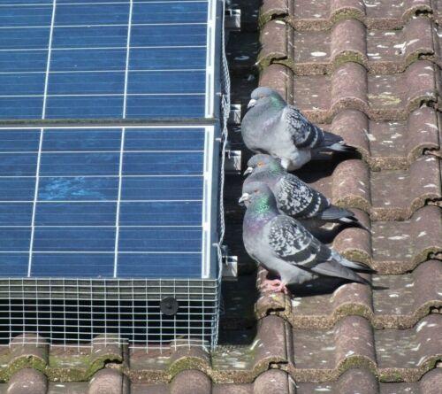 Solarfix Panneau Solaire Treillis Métallique Clips Pigeons Oiseaux @ 70