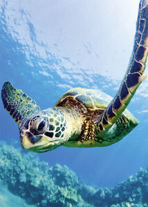 Details about 4 GREETING CARDS Hawaiian BLANK Turtle Friend by Monica &  Michael Sweet