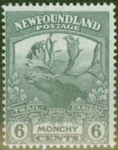 Newfoundland-1919-6c-Slate-Grey-SG135-V-F-Legerement-MTD-Excellent-Etat