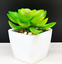 Artificial-Succulent-Plants-Small-Fake-Succulent-Bonsai-Garden-Miniature-Decor thumbnail 12
