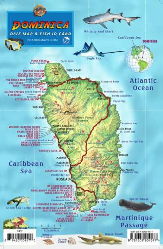 Dominica Dive Map /& Coral Reef Creatures Guide Franko Maps Laminated Fish Card